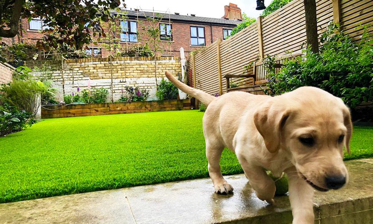 dog & pet-friendly artificial grass