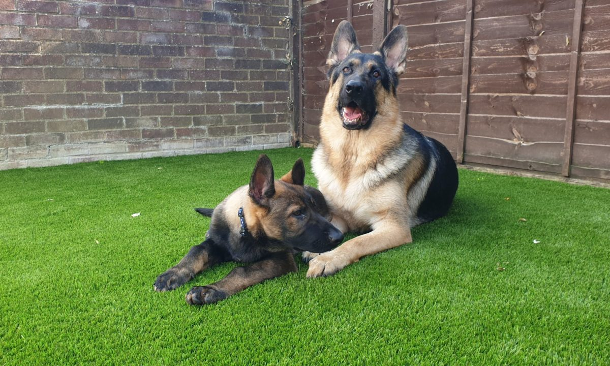 dog-friendly artificial grass